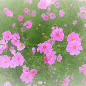 南会津の前沢曲家集落を装う可憐な花たち・・・