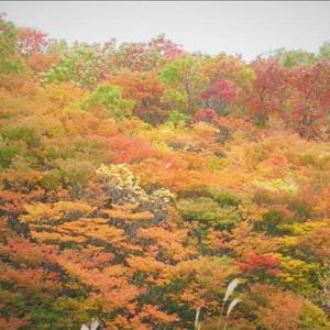 那須山の紅葉・・・