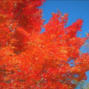 10月25日快晴、赤城山の紅葉も疎らに綺麗でした。