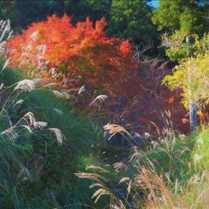 晩秋の紀州路の紅葉 1