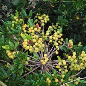 太東岬の植生