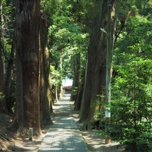 近隣散策、東金、日吉神社の大杉参道、 杉並木の杉は樹齢が250年・・・