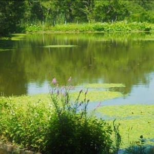 水草が豊富な池がある公園、 夏の散策で水の見える散策路は心が安らぎます・・・