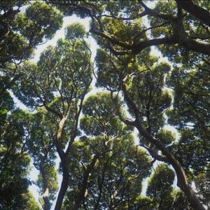 シイなどの樹木の葉の間から見える自然の光の演出で~す。