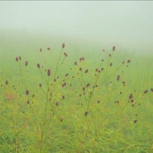 草原散歩、切りが無い程の霧, ワレモコウ、アキノキリンソウ、ノコンギク・・・