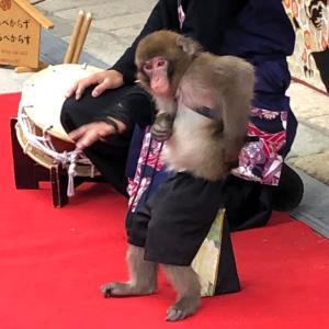 猿回しについて