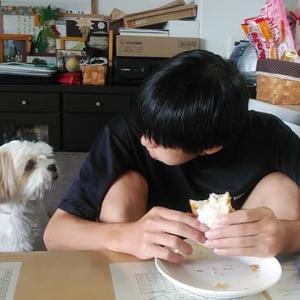 パン好きな犬