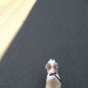 日陰を歩いて