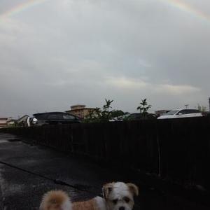 犬の散歩中に虹