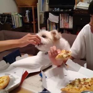 ピザが好き