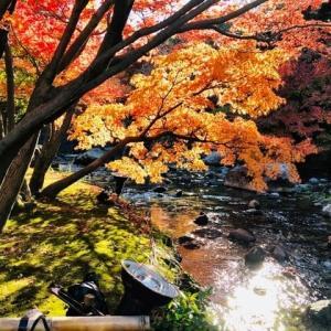 昨日の、白鳥庭園の紅葉🍁