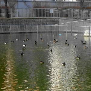 1月4日の旅ラン(白鳥庭園~名古屋港)・2