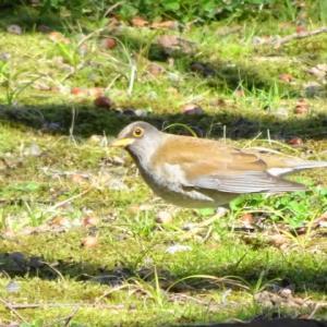 3月12日白鳥庭園・野鳥