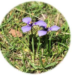 花名不詳の可愛いお花