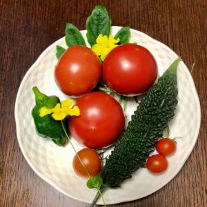 ベランダ菜園野菜