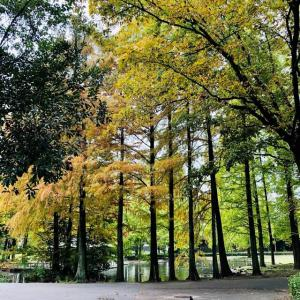 日々秋色を