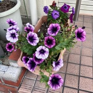 冬に咲くお花