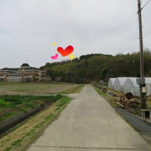 峨城山の桜の今