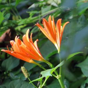 珍しい花とトンボ