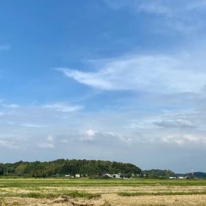 蕎麦畑 その1