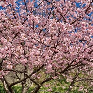 春の花見! その2