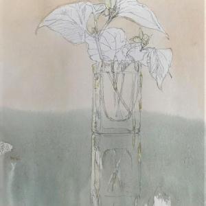 花のある生活 花言葉「 白い追憶 」ドクダミ