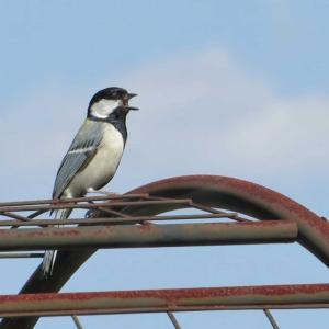 4月になってやってきた野鳥たち