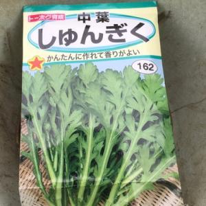 春菊を播種したYO(^^ゞ