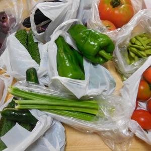 実家で貰った野菜。
