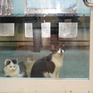 ラーメン屋に来る親子猫。