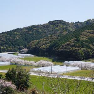 琴海、戸根川近くのお墓