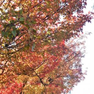 今朝の雑木紅葉と風景