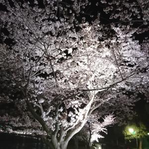 夜桜・千波湖~護国神社20200402