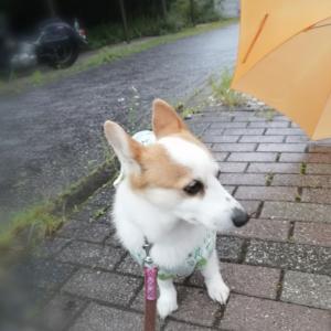 気まぐれな梅雨の雨