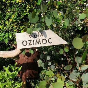 長崎 ドライブの秋③ 大きな樹の下で♪CAFE OZIMOC
