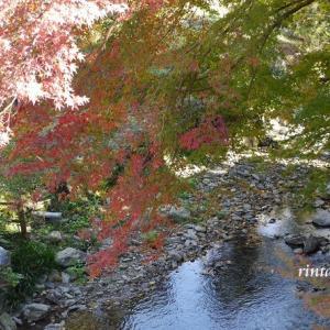 福岡 ドライブの秋① 筑前の小京都☆城下町の秋月城跡の紅葉