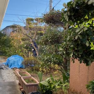 庭全体の剪定と管理