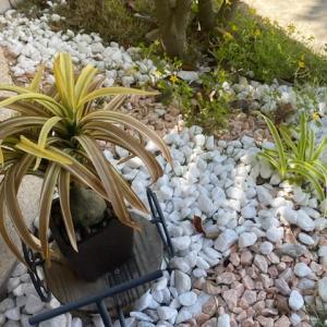 鉢植えの土