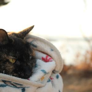 キャンプ猫になったよ!