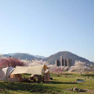 満開の桜をGET!その2 東北キャンパーで本当によかった!
