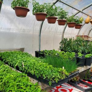 農家  / 家庭菜園   植え付け