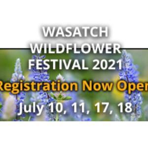Wild Flower フェスティバル