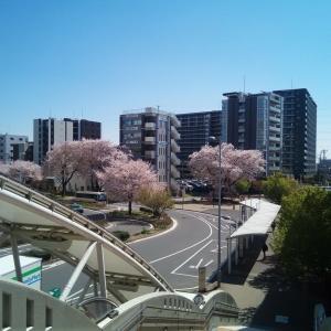 桜開花の風景