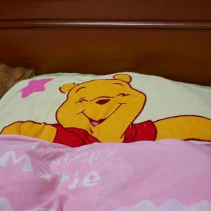 ティアラとアリストがベッドに・・・。