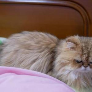 ベッドでお昼寝&真似っ子エレナ。