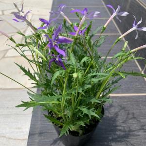 お庭のお手入れ♬お花の植え替え