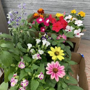 季節のお花を植える