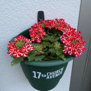 お花と私,゚.:。+゚,゚.:。+゚