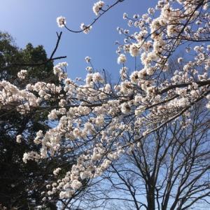 我が家、一大事の春