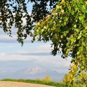 北海道ラストラン 9日目-② 季節をずらしてパッチワークの丘へ・・・
